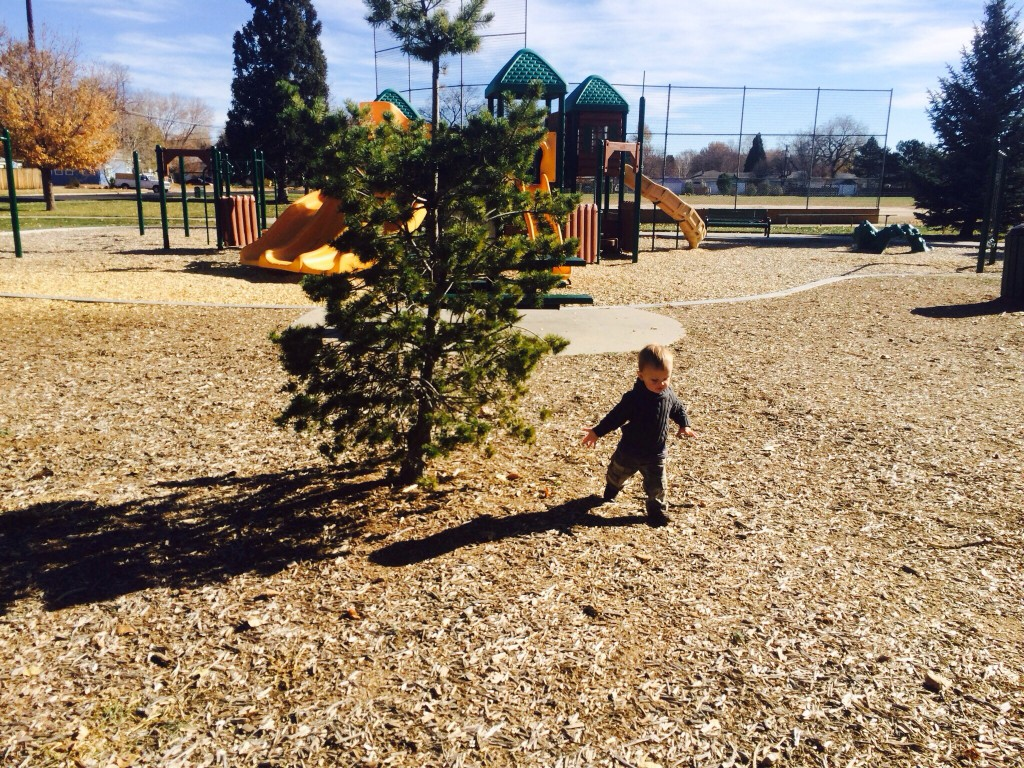 Felix next to the newest playground tree